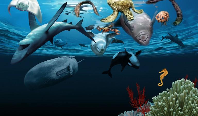 ocean-animals