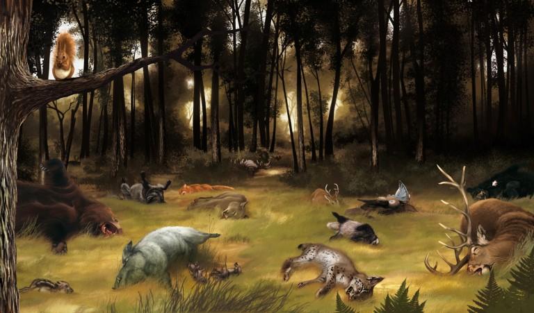 Forest-fein-Kolor-Tiere-3_5
